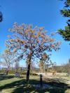 Parc de l'Ermita